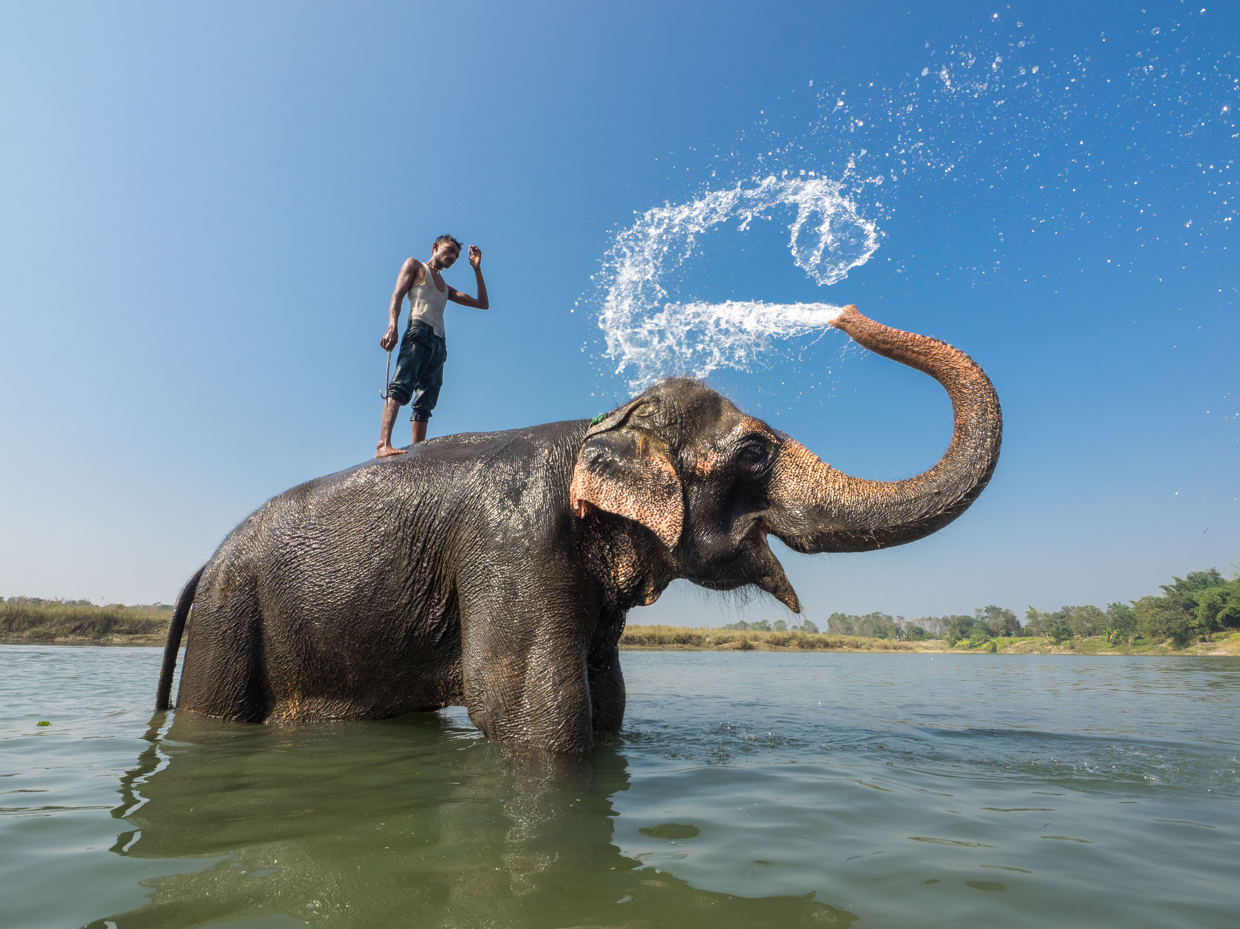 Stunning Pictures Show Man And Elephant Taking A Shower