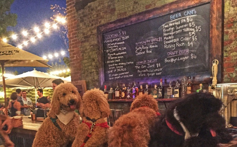 Samson the a golden retriever cross poodle and friends at a bar
