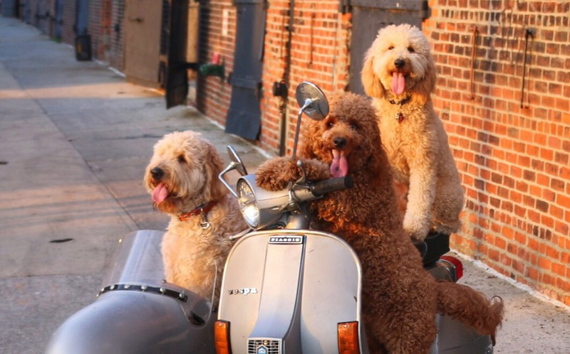 Samson and friends riding some scooters