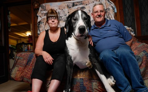 Yogi Bear with owners, Rob and Sue on Yogi's couch, it is not very often that Yogi allows them to sit on his couch