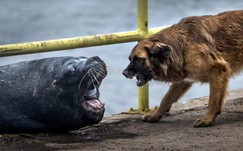 The dog goes in for the fish in the sealions mouth