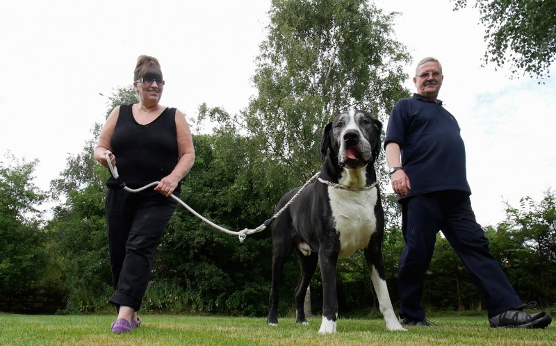 Owners Rob and Sue take Yogi for a walk