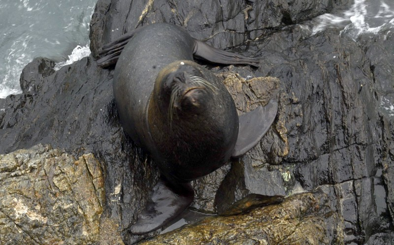 The Sealion waiting for the fish