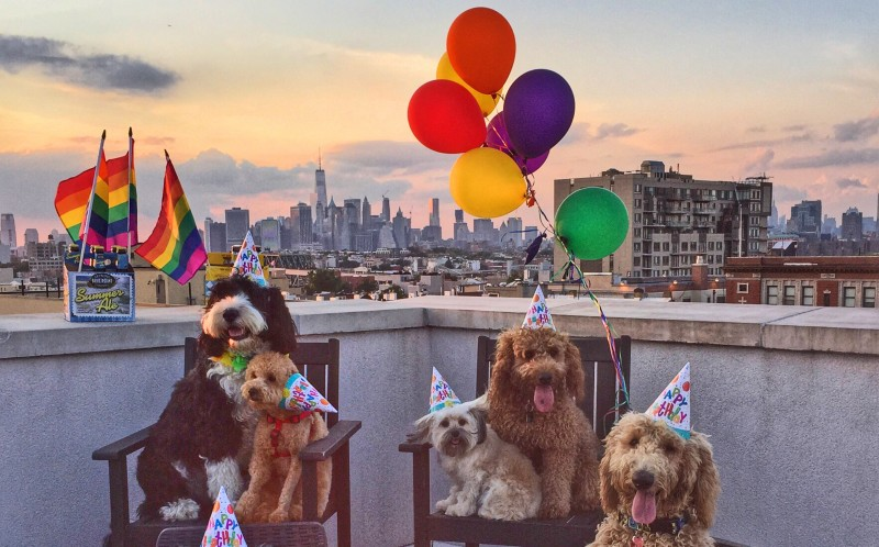 Samson and friends having a rooftop party