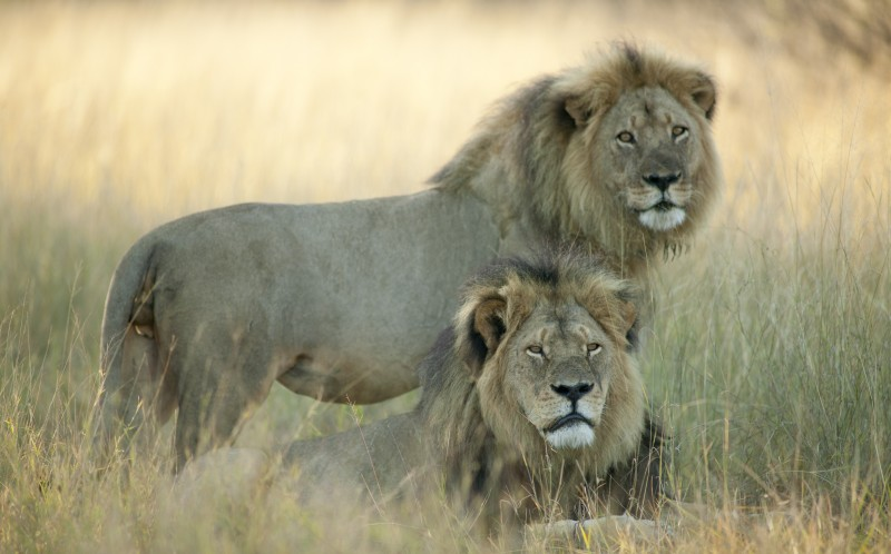 Cecil and Jericho (top)