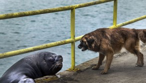 The dog and the sea lion fight for the fish