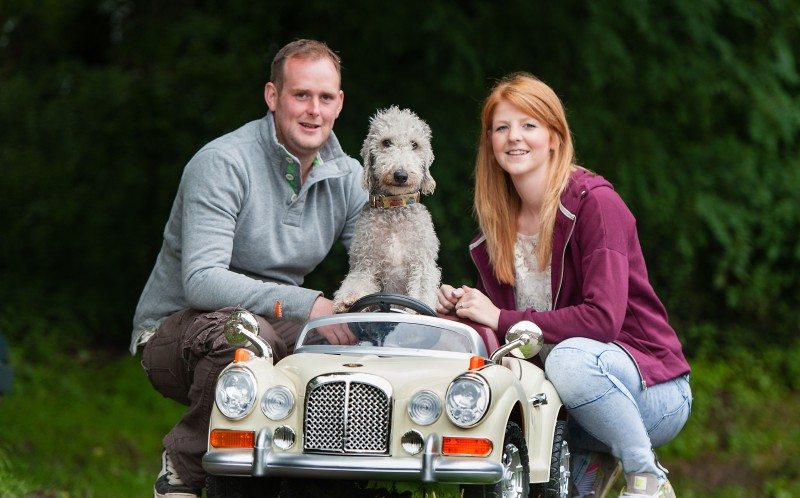 A very playful pooch has got back behind the wheel