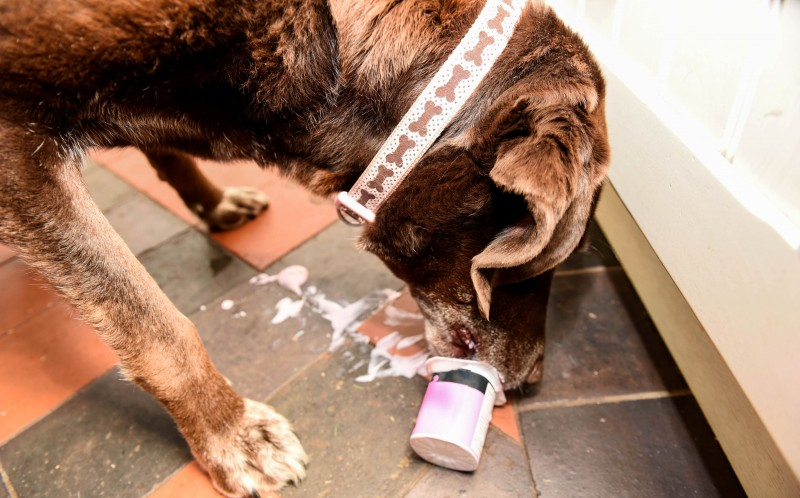 Rolo has also figured out how to open the occasional yogurt pot