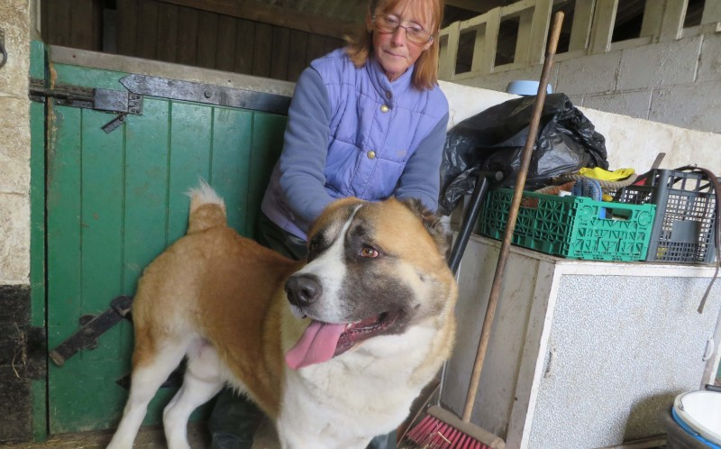 The 'world's biggest puppy' Tzar, who is 10st at 10 months old is being kept at West Yorkshire Dog Rescue