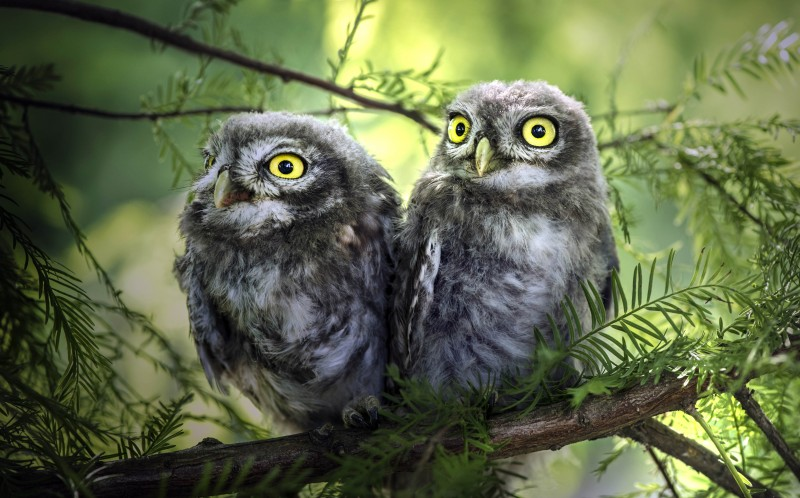 Two owl brothers stand together one is in noticeably better spirits than the other