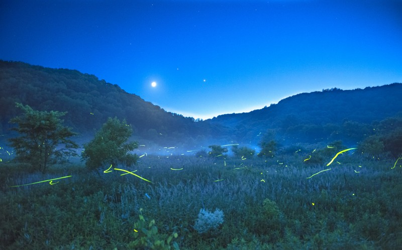 A dreamy landscape with fireflies