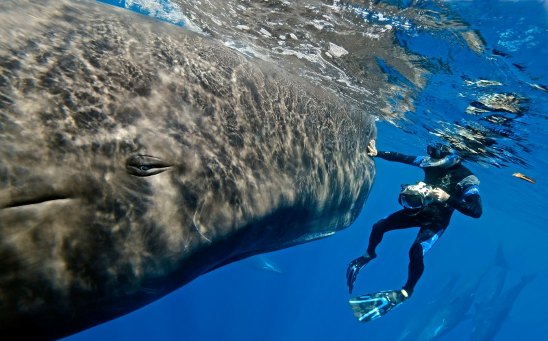 Marc Allinson swimming along with a sperm whale