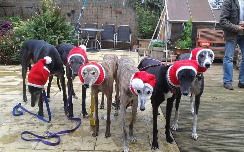Rescue dogs with their wolly hats on