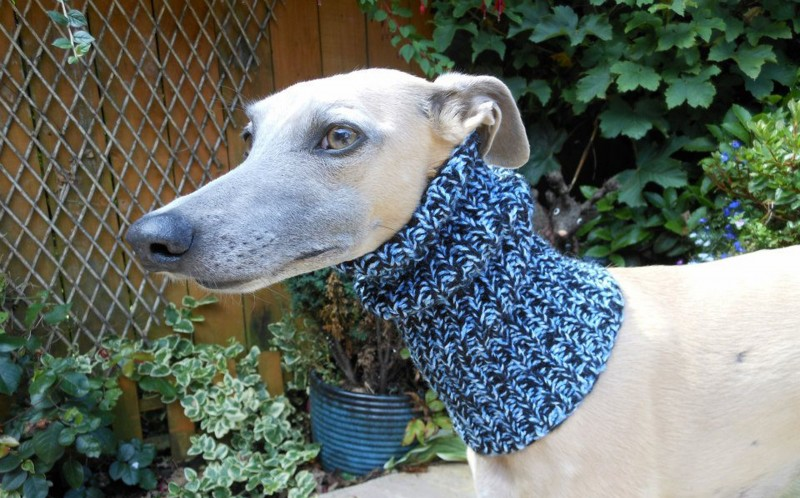 Dog in a snood