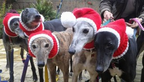 PIC FROM CATERS NEWS - (PICTURED: Close up of wollu hats ) - Meet the mum who spends more than 4,000 hours knitting Christmassy jumpers for abandoned dogs. Jan Brown, 52, from Seaburn, Sunderland, has hand-knitted more than 300 of her festive designs to give a warm woolly gift to homeless greyhounds at Christmas. Each jumper can take the up to 20 hours to complete and are sent to pet rescue centres across the country. Since starting five years ago she has made Father Christmas outfits, antlers to even woolly hats, scarves and snoods for dogs as well as reconditioning old blankets into coats. SEE CATERS COPY.