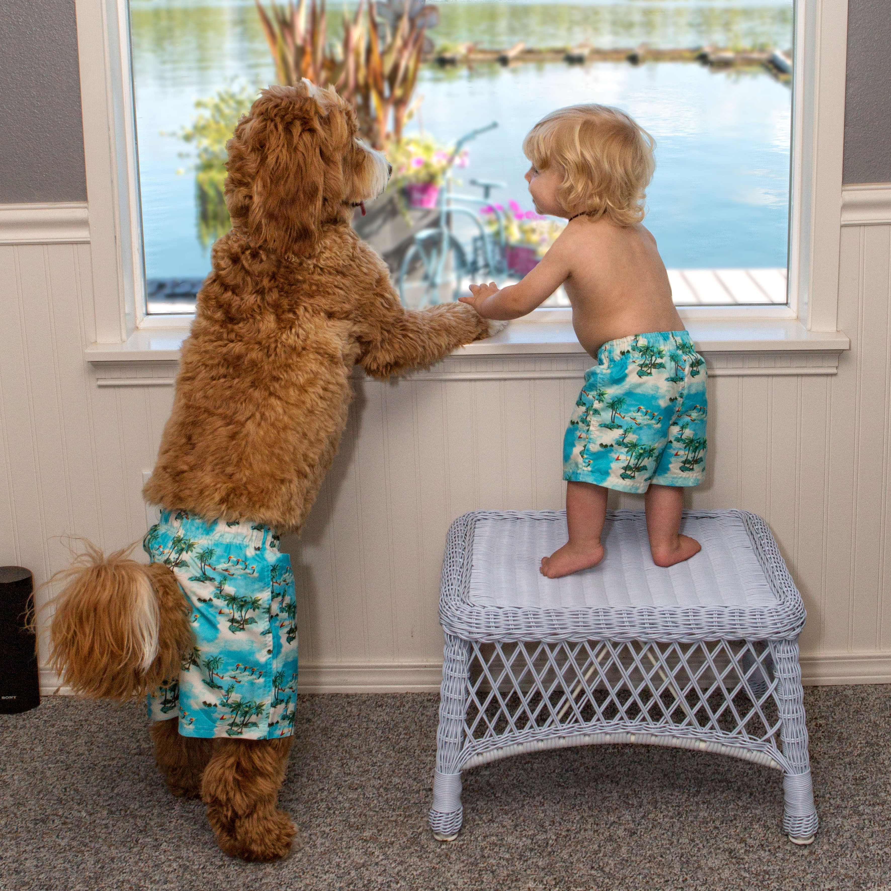 A dog and his fostered friend: New Instagram sensation ...