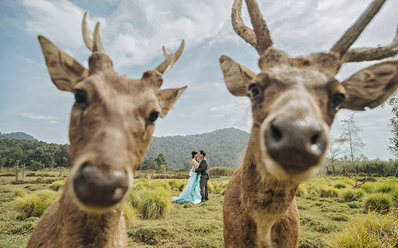 Couples wedding photo photobombed by deer