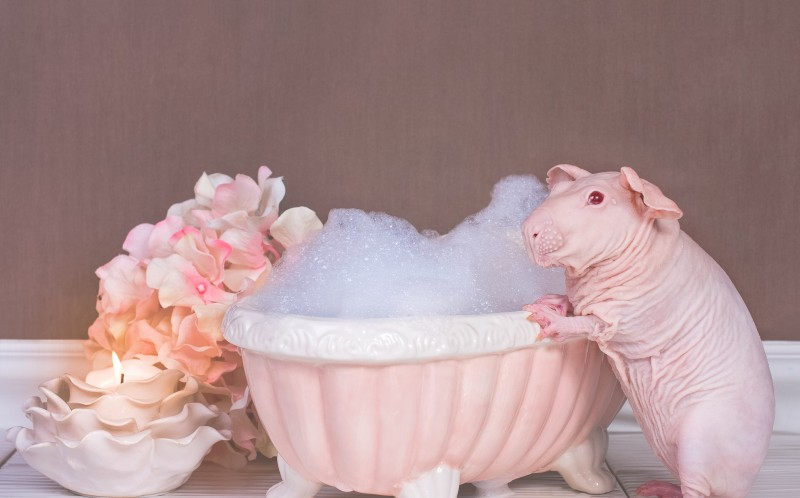 Strawberry Shortcake can be seen soaking in a custom made bubble bath and  even got out the candles to really get a relaxed vibe going. Will I grow some fur soon mum  Super cute pictures of  naked