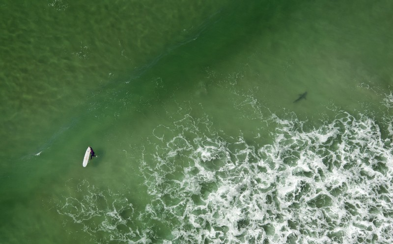 A surfer in the water whilst a shark is very close