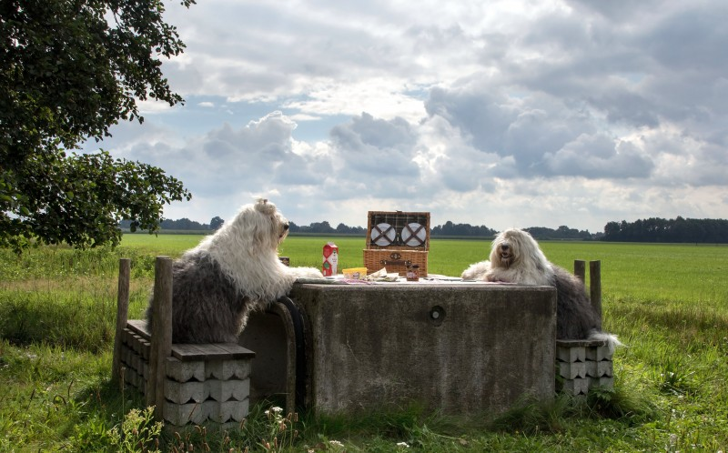 Sophie and Sarah, the sheepdog sisters enjoying a picnic
