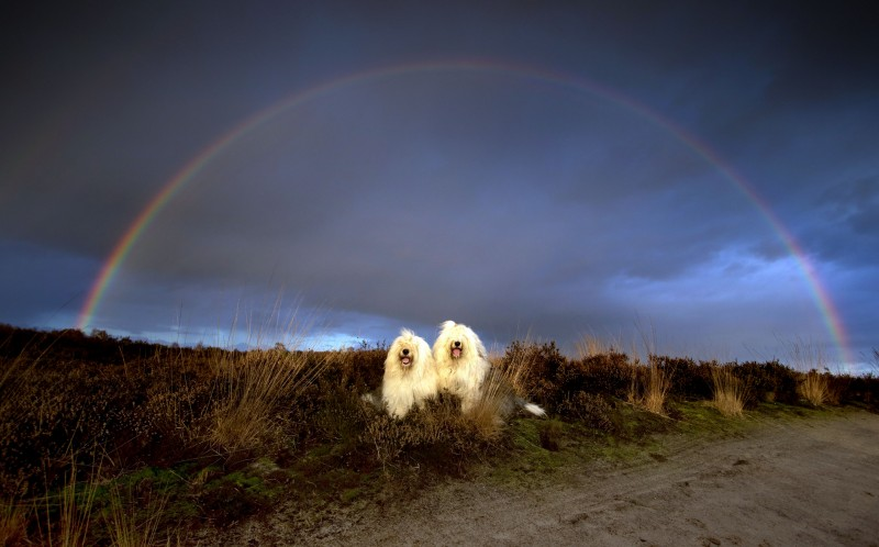 Sophie and Sarah, the sheepdog sisters, under a rainbow