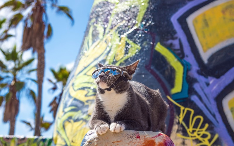 Sunglass Cat - actual name Bagel