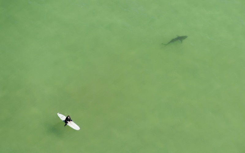 The drone footage showing a surfer close to one of the sharks shark