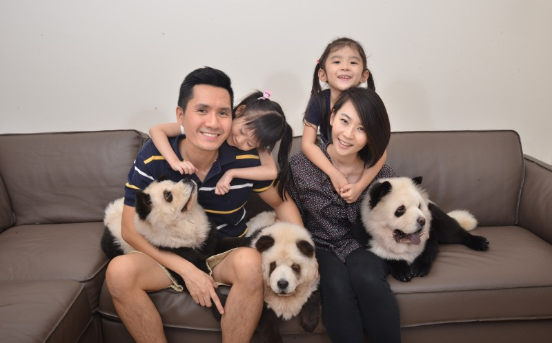 The adorable dogs with their owners