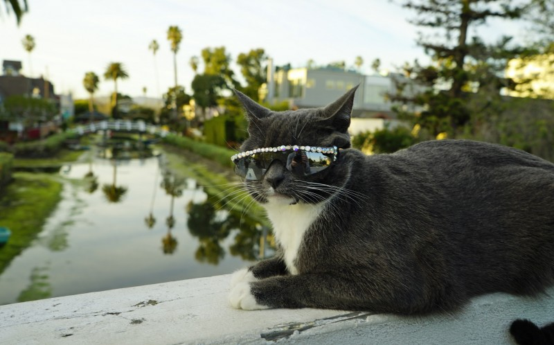 Sunglass Cat - actual name Bage