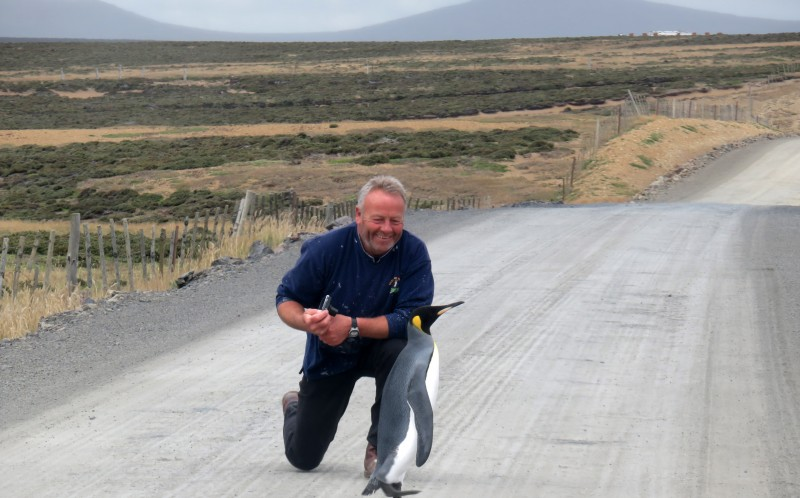 Paul Chapman encountered the penguin along a road in the falkand islands
