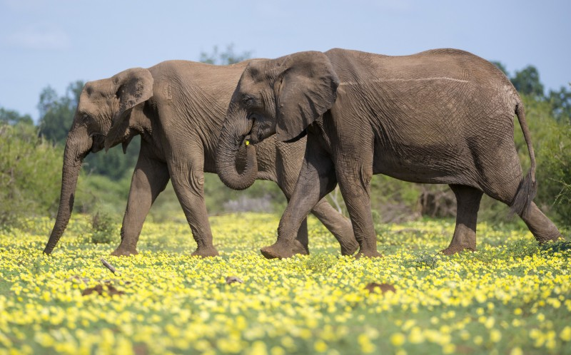 Elephants enjoying the spring weather in Africa