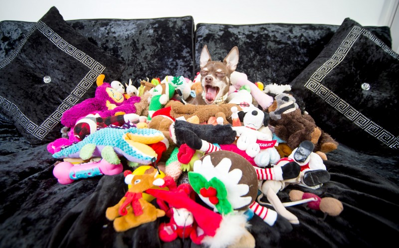 Queenie surrounded by her toys