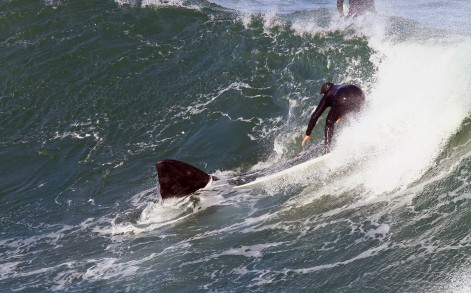 The whale joins in with surfers for a surf and swim