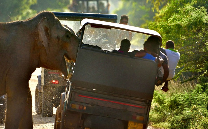 A boisterous elephant causes problems for a truck full of tourists