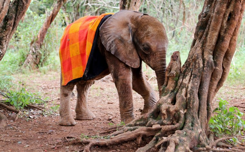 Elephants with their blankets