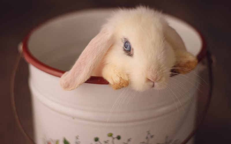 The tiny bunny in a plant pot
