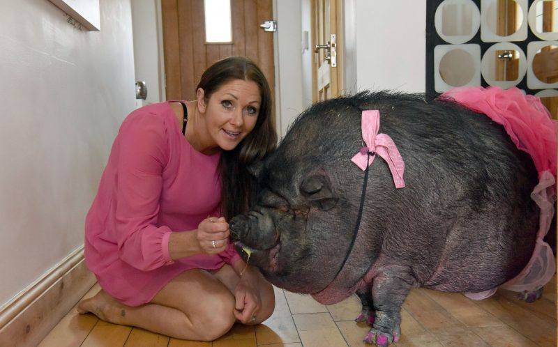 Janey Byrne poses with one of her pigs