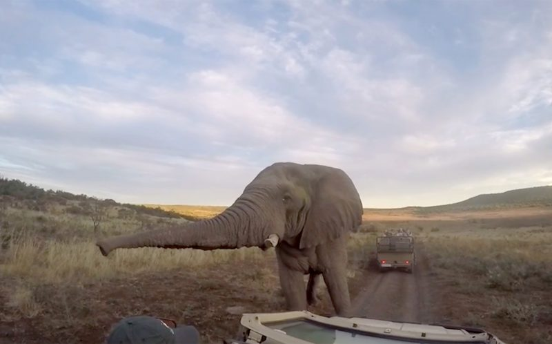 The elephant approaching and taking a selfie with Thomas