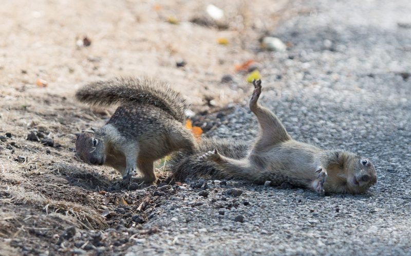 They're nuts! Kung fu squirrels pull off some serious flying
