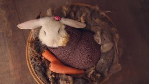 The tiny bunny in a basket with a carrot