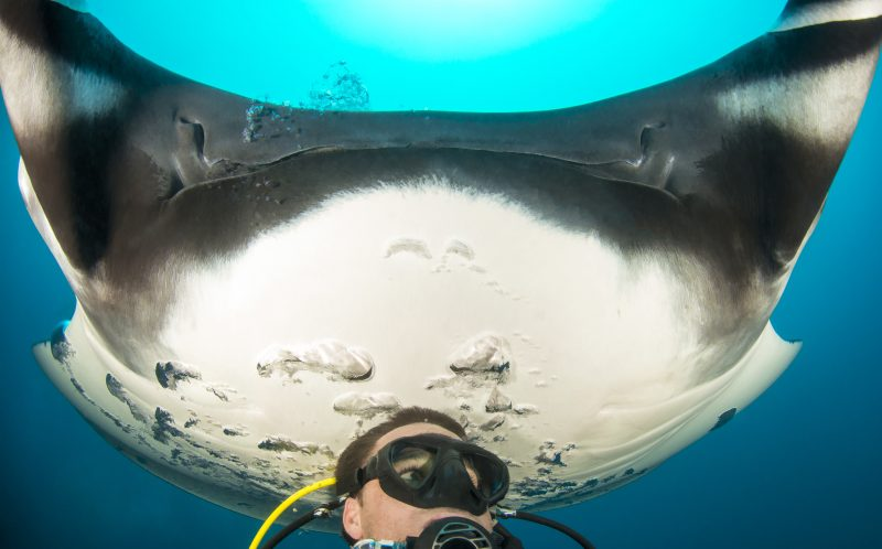 PIC BY CHRISTIAN MILLER/ CATERS NEWS - (PICTURED: A manta ray smiles in the background behind a dive.) - Hes behind you! This photographer got a surprise when he decided to take an underwater selfie  and got photobombed by a MANTA RAY. After swimming deep into the clear blue ocean, the diver decided to stop and take in his surroundings  but he got a shock when he realised what was creeping up behind him. The hilarious moment was caught on camera by German photographer and conservationist Christian Miller, 38, when he was diving in Mexicos Socorro Islands. Christian, who lives in Australia, said: Ive never seen this behaviour in manta rays before! SEE CATERS COPY.
