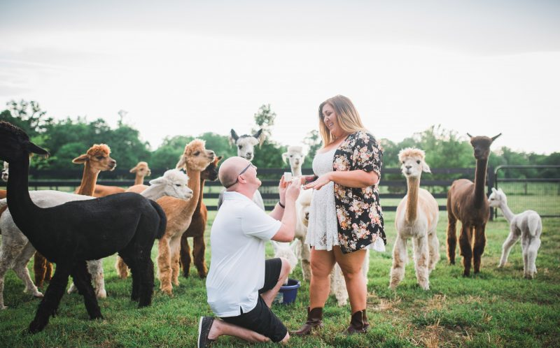 When Kevin Scanlon decided to get down on one knee and propose to fiance Bethany Rumley in APALCA farm.