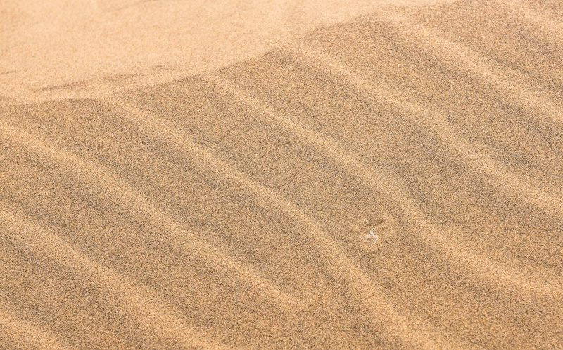 WIM VAN DEN HEEVER / CATERS NEWS - A Peringueys adder snake hidden amongst the grains of sand.