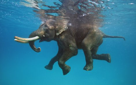 MIKHAIL KOROSTELEV/ CATERS NEWS - Rajan's love of the sea is part of the island's heritage.