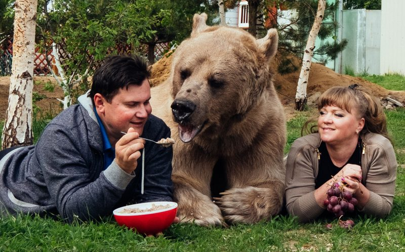 Stepan the bear with Svetlana and Yuriy Panteleenko eating porridge.