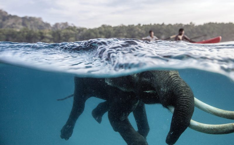 MIKHAIL KOROSTELEV/ CATERS NEWS - An Elephant named Rajan teh swimming in the sea.