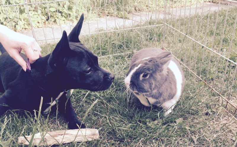Frankie is a French bulldog terrier and Dylan love chilling in the park.