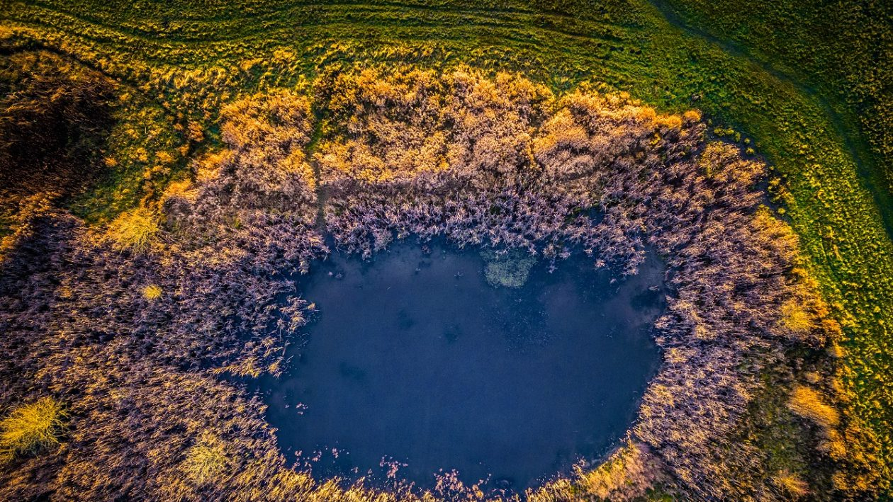 MICHAEL RASMUSSEN/CATERS NEWS -  A aerial view of a pond surrounded by trees in Naestved, Denmark.