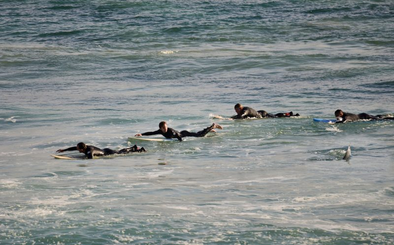RICHARD KNOPPERT/ CATERS NEWS - The shark swimming along side the surfers at Mettams Pool, near North Beach, in Perth, Australia.