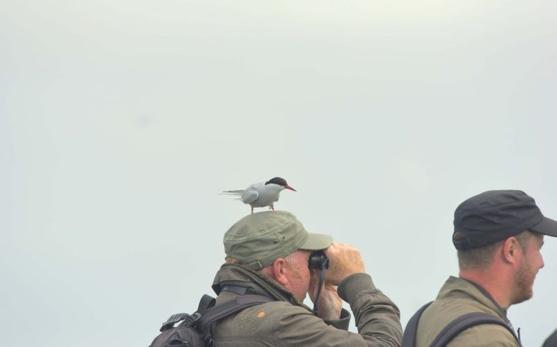 SIMON NEWMAN/MERCURY PRESS : Richard Baines using his binoculars to look for arctic tern in Farne Islands, off the Northumberland coast.
